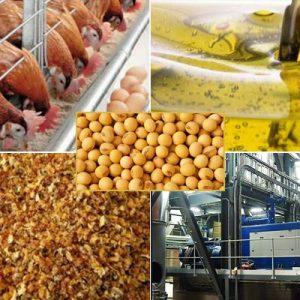 Yarım yağlı soya üretimi